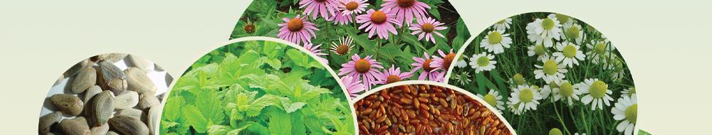 Nasiona ziół i przypraw - thumbnail